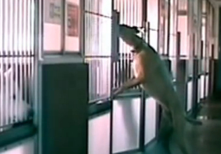 A Hidden Camera Caught This Shelter Dog Doing Something Incredible